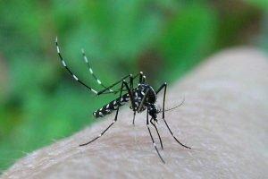 come-curare-le-punture-di-zanzare-con-metodi-naturali_d9be7cc65f426b2045b4863e30be9c25