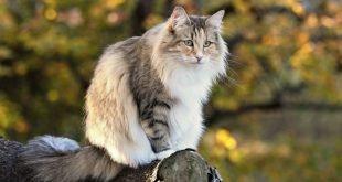 Il benessere dei nostri amici gatti e cani