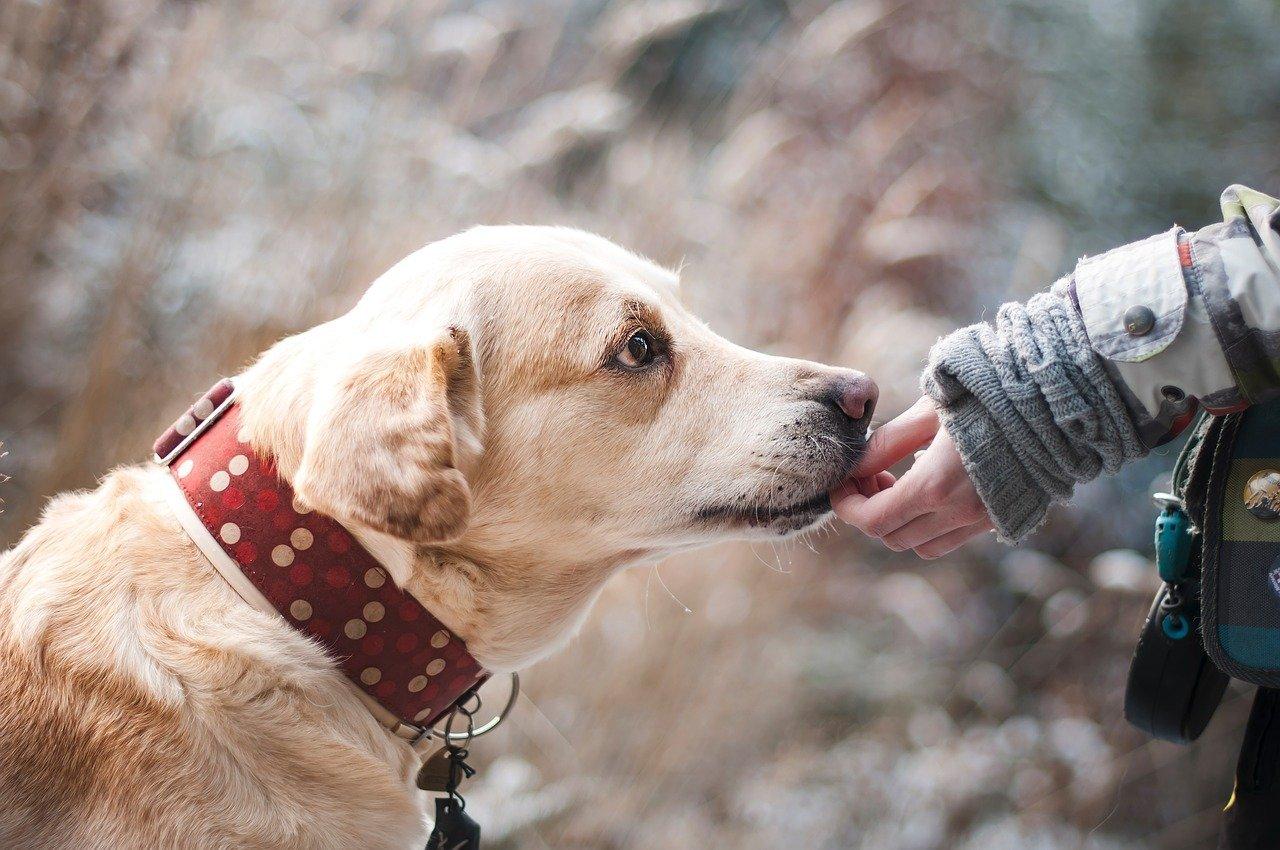 Sostanze fitochimiche importanti nei cani